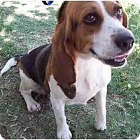 Adopt A Pet :: Maudie - Phoenix, AZ