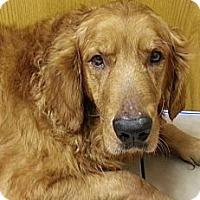 Adopt A Pet :: Telly - Danbury, CT
