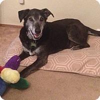 Adopt A Pet :: Ruby - Petaluma, CA
