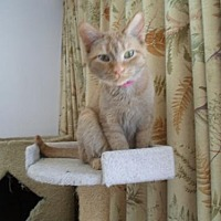 Domestic Shorthair Cat for adoption in Montello, Wisconsin - Princess