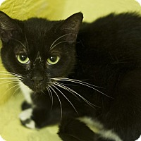 Adopt A Pet :: Aster - Great Falls, MT
