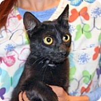 Adopt A Pet :: Midnight - Wildomar, CA