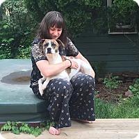 Adopt A Pet :: Winston - Toronto, ON