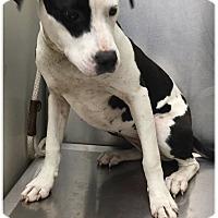 Adopt A Pet :: TURKEY--URGENT - Seabrook, NH