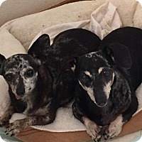 Adopt A Pet :: Trixie and Bling - Georgetown, CO