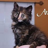 Adopt A Pet :: Anna - Media, PA