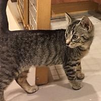 Adopt A Pet :: Malibu - Highland Park, NJ