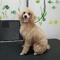 Adopt A Pet :: CHLOE AND TEDDY - Gustine, CA