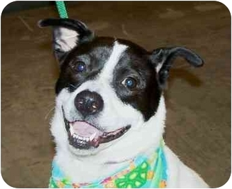 Border Collie Mix Dog for adoption in Jacksonville, Florida - Maddie