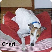 Adopt A Pet :: Chad - Fremont, OH