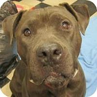 Adopt A Pet :: Smokey - Alliance, NE