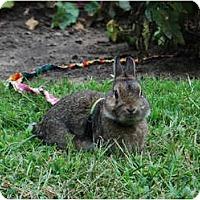 Adopt A Pet :: Radar - North Gower, ON