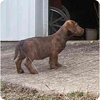 Adopt A Pet :: Logan - Glastonbury, CT