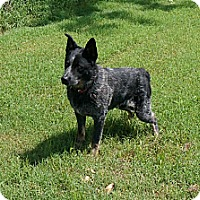 Adopt A Pet :: Ocee - Conway, AR