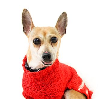 Terrier (Unknown Type, Small) Mix Dog for adoption in Wilmington, Delaware - Paco