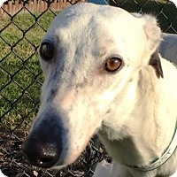 Adopt A Pet :: GF Ghost - Longwood, FL