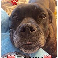 Adopt A Pet :: Ebony - Raritan, NJ