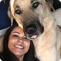 Adopt A Pet :: Boris - Ball Ground, GA