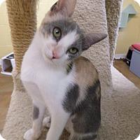 Adopt A Pet :: Lady - Lake Charles, LA