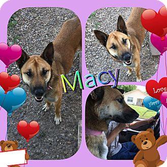 Shepherd (Unknown Type) Mix Dog for adoption in Ravenna, Texas - Mace