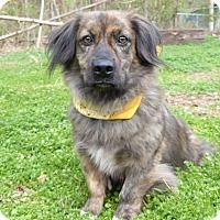 Adopt A Pet :: Rusty - Mocksville, NC