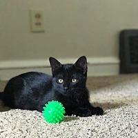 Adopt A Pet :: Tova - Minneapolis, MN
