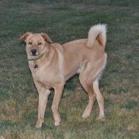 Adopt A Pet :: GAMBIT - troutman, NC