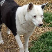 Adopt A Pet :: Piglet - Hopkins, SC