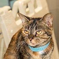 Adopt A Pet :: Raffles - Binghamton, NY