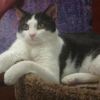 Adopt A Pet :: Eddie - Elk Grove Village, IL