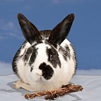 Adopt A Pet :: Quill - Marietta, GA