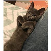 Adopt A Pet :: Dovie     171486 - Atlanta, GA