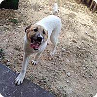 Adopt A Pet :: Gunner - West New York, NJ