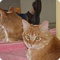 Adopt A Pet :: de Oro - Scottsdale, AZ