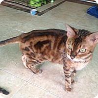Adopt A Pet :: Katniss - Lantana, FL