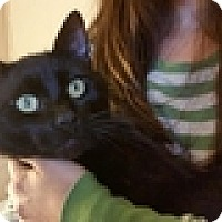 Adopt A Pet :: Hayden - Vancouver, BC