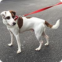 Adopt A Pet :: Wishbone - Jupiter, FL