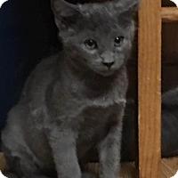 Adopt A Pet :: Merrick - Loveland, CO
