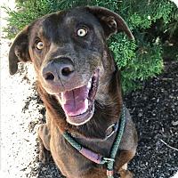 Adopt A Pet :: Hunter - Meridian, ID