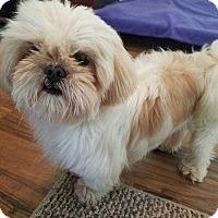 Adopt A Pet :: Phineas - Allen, TX