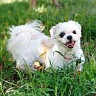 Adopt A Pet :: Thea