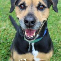 Adopt A Pet :: Cato - Bradenton, FL