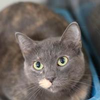 Adopt A Pet :: Bubbles - Baton Rouge, LA