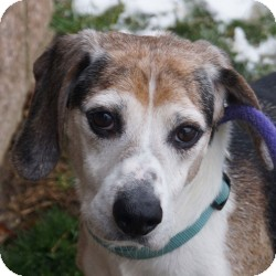 Terrier (Unknown Type, Medium) Mix Dog for adoption in Eatontown, New Jersey - Mr. Bogart