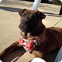 Adopt A Pet :: Louise - Houston, TX