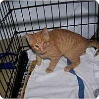 Adopt A Pet :: Winky - Syracuse, NY