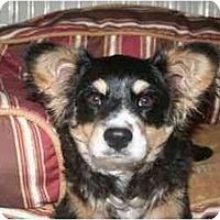 Adopt A Pet :: Buster - Arlington, TX