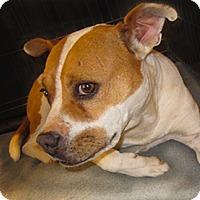 Adopt A Pet :: Taffy - Santa Fe, NM