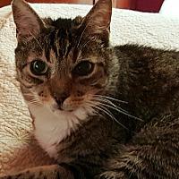Adopt A Pet :: Puma - Pasadena, CA