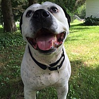 American Bulldog Mix Dog for adoption in kennebunkport, Maine - Jack - Courtesy Post